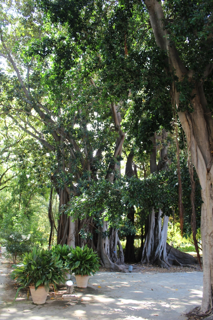 botanical-garden-in-palermo_02