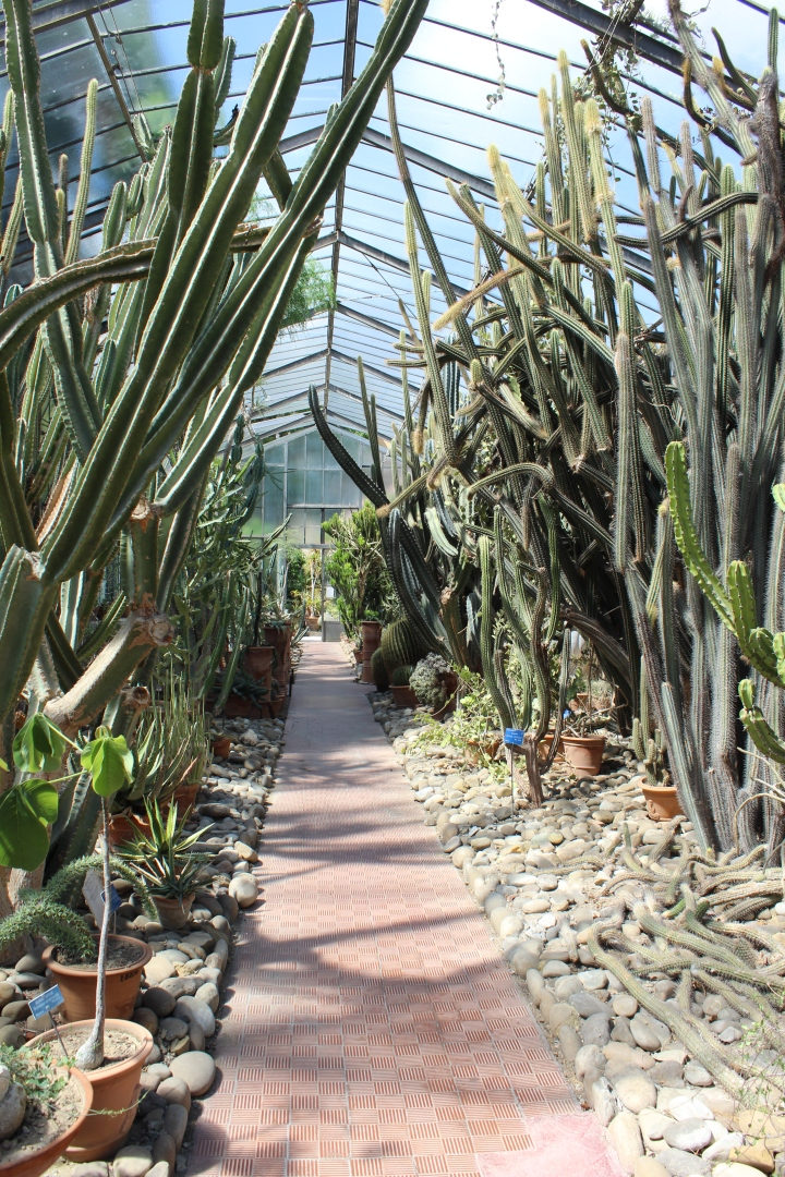 botanical-garden-in-palermo_10