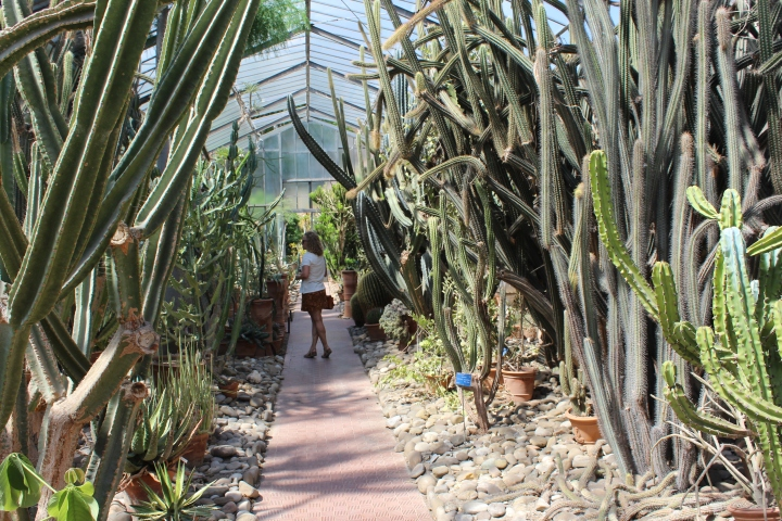 botanical-garden-in-palermo_11