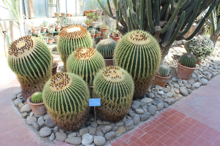 botanical-garden-in-palermo_12