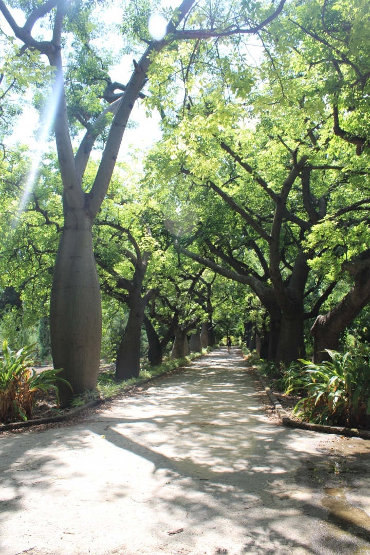 botanical-garden-in-palermo_18